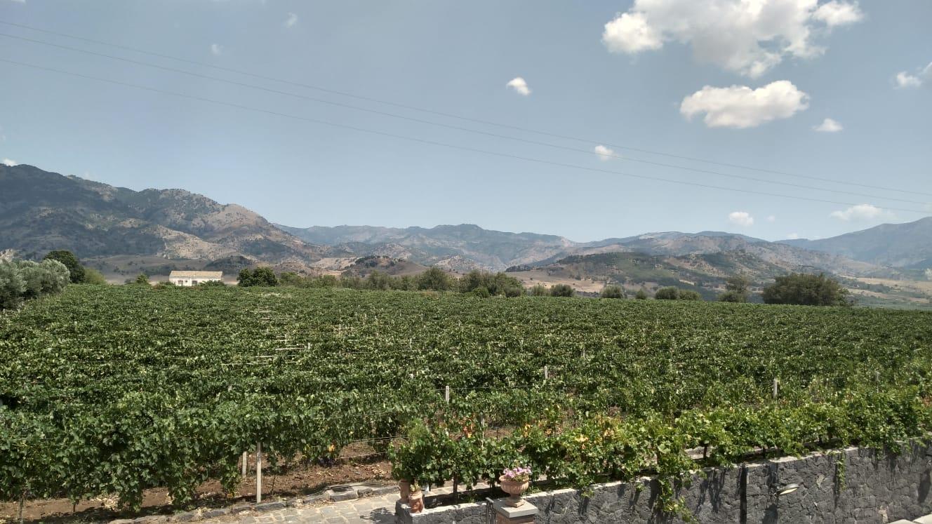 Etna Wine