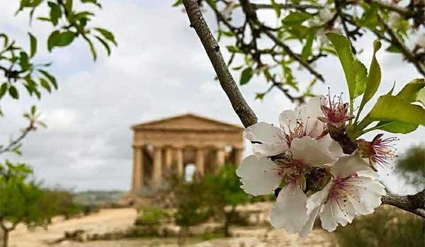 The Almond blossom festival