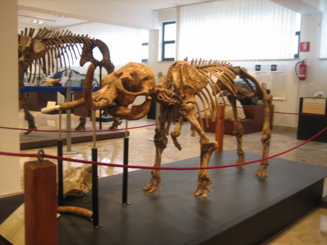 Bones of ancient animals at the Museum Gemmellaro in Palermo.