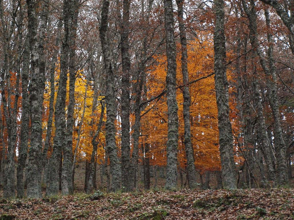 bosco di malabotta